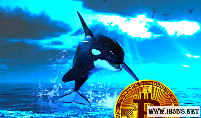 بیت کوین: افول نهنگ های بزرگ، تکثیر نهنگ های کوچک